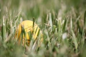 allthingsgoodandwise, Easter Sunday, egg hunt,